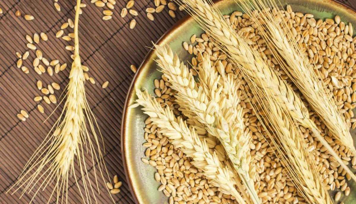 From the Dna of durum wheat to the future of pasta