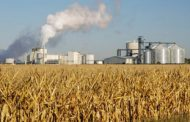 Global industrial use of grains continues uptrend in 2016-17