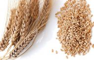 Japan creates new import category for wheat