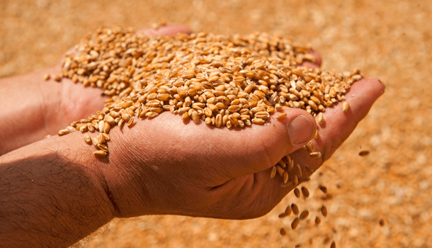 Wheat imports rising in the Philippines