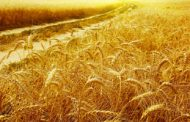 Australia will increase wheat exports