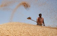 Game of grains: India's agrifood policies need a holistic review
