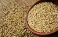 Ardent Mills launches North American-grown quinoa program